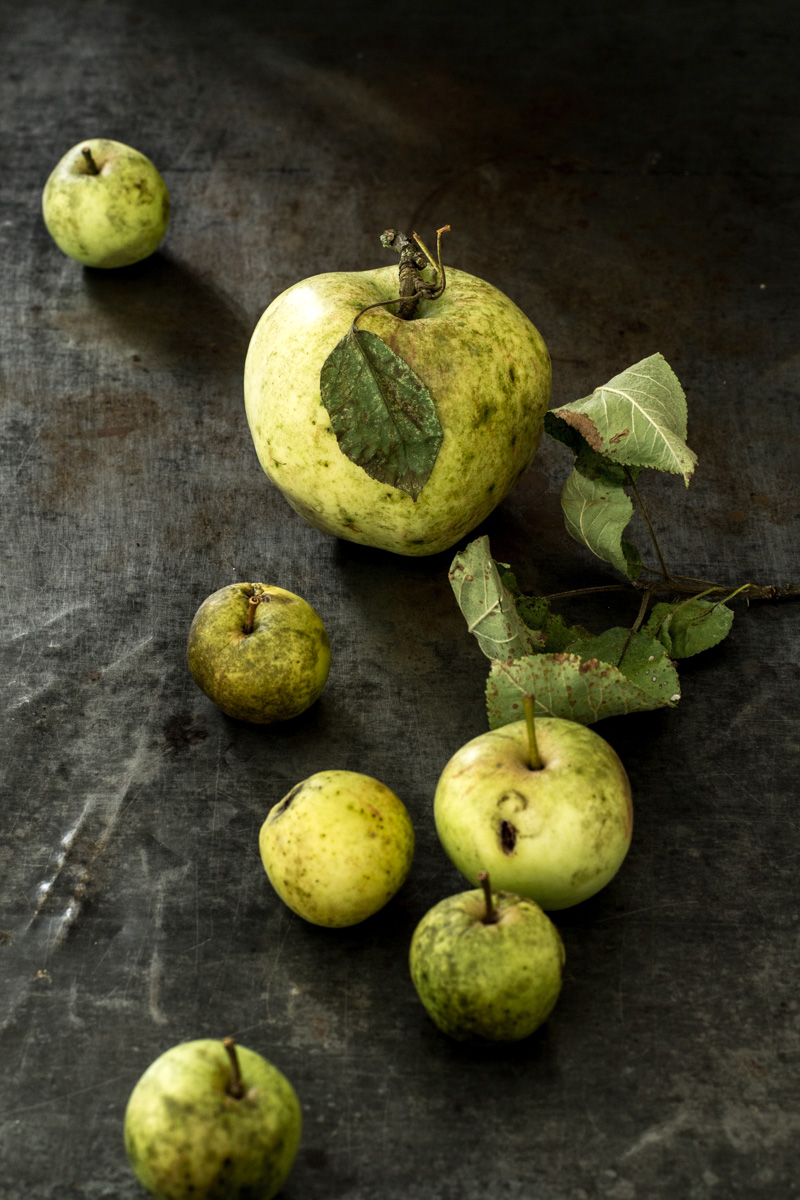 Apfel selbst gepflueckt