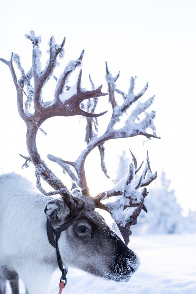 Hello Santa - Das Backbuch zur Advents- und Weihnachtszeit #backen #weihnachtsbäckerei #weihnachten #keksebacken #torten #kuchen