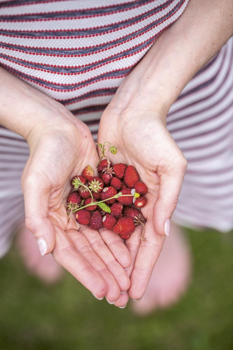Hello Berries - Das Beeren-Kochbuch für den Sommer